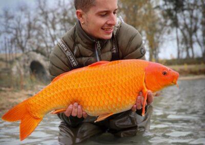 pêche carpe koi paris